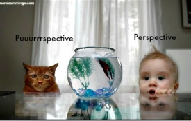 What's Your Perspective?